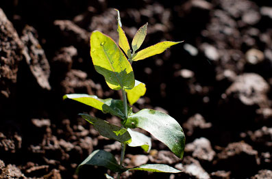 Plantamos – Manejamos – Cosechamos