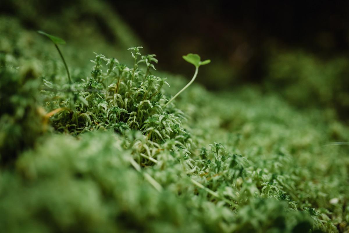 ARAUCO se convierte en la Primera Compañía Forestal del mundo en certificar su Carbono Neutralidad