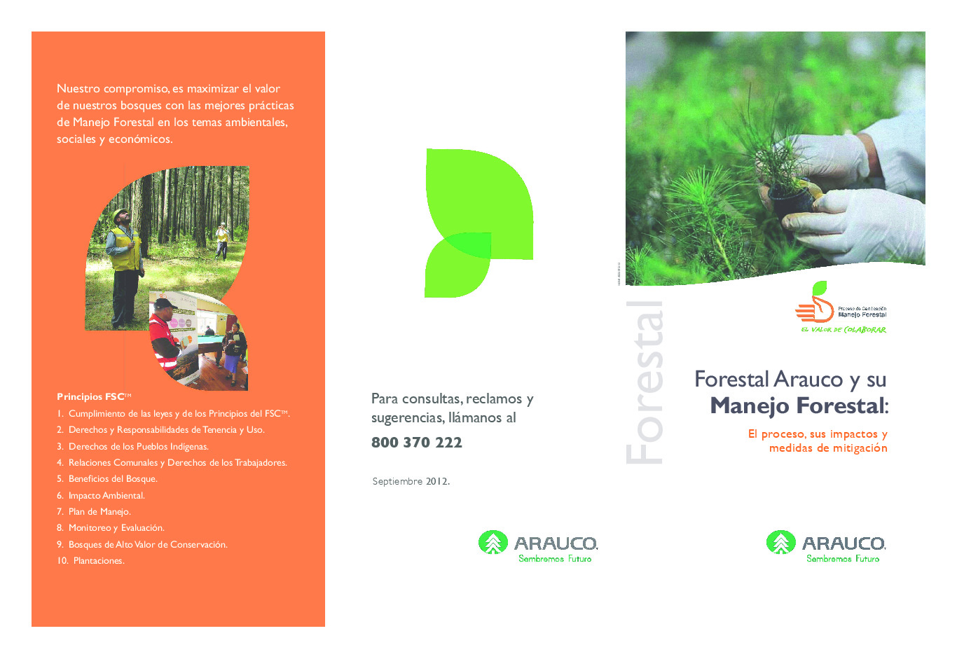 Manejo Forestal - El proceso, sus impactos y medidas de mitigación