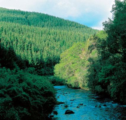 Arauco areas de alto valor de conservaci n for Importancia economica ecologica y ambiental de los viveros forestales