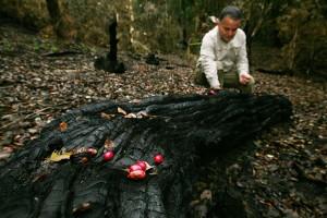 A paso firme avanza recuperación de bosque nativo quemado por incendios