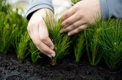 Tudo começa a partir do nosso patrimônio florestal, que fornece a matéria prima para toda a nossa cadeia de valor.